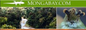 Mongabay - an excellent source to keep you well informed with what's happening to the beautiful ecosystems of our planet