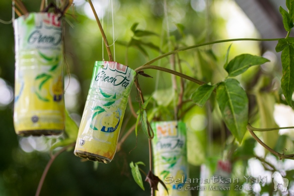 Recycling whilst filling space with green foliage breathes more life into our living spaces