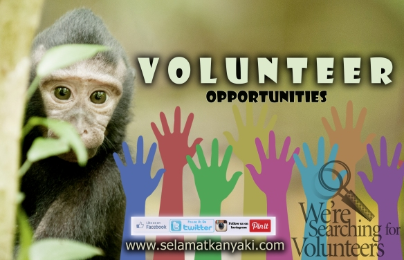 Poster Volunteer wordpress