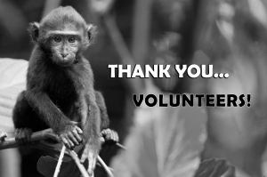 Many thanks from our cheeky yaki for the helping hands from our volunteers.