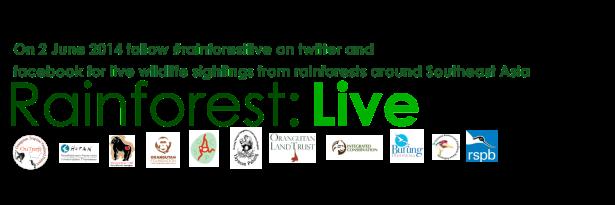 Rainforest Live Large 2