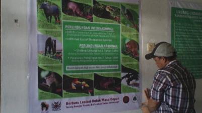 Spanduk kami yang berisikan beberapa jenis satwa liar Sulawesi Utara yang dilindungi, serta hukum yang melindungi satwa tersebut | Our banner consisting of some of the protected wildlife in North Sulawesi, including the law that protects them